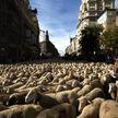 Две тысячи овец и коз прошлись по Мадриду (ВИДЕО)