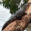 Крокодилы плавают по улицам: в Австралии людей эвакуируют из охваченных наводнением районов