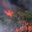 Природные пожары в Австралии: сгорели около 30 домов