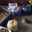 Грибной рекорд в Светлогорске: местный житель собрал 100 килограммов лисичек и боровиков
