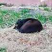 Живодёры выкололи глаза двум дворняжкам в Орше