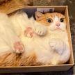 7 фотографий, которые доказывают, что коты – самые милые создания во Вселенной