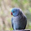 «Чего делаешь?»: диалог девушки с любопытным попугаем умилил соцсети