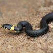Мужчина загрыз укусившую его змею