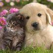 Чипирование питомцев и запрет жестокого обращения: новые правила содержания домашних животных введут в Беларуси