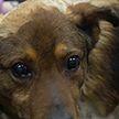 Продолжение истории о спасении Малыша: как сейчас живет собака, которую заживо закопали?