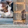 «Вот разиня!» Кот на секунду отвлекся, упустил свою добычу и рассмешил всех (ВИДЕО)