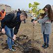 «Зелёное будущее Беларуси»: в Бресте волонтёры высадили 250 деревьев
