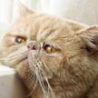 Поговорите же с ней кто-нибудь! Кошке хочется пообщаться, но никто ей не отвечает. Посмотрите, улыбнетесь 100%! (ВИДЕО)