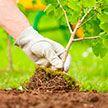 Акция «Посади дерево: сделай Минщину краше!» стартовала в столичном регионе