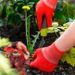 Как избавиться от сорняков и травы навсегда. Секреты «чистых» грядок