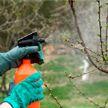 Как защитить свой сад и огород от вредителей? Рубрика «Удачный гид»