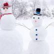 Попытка собаки слепить снеговика рассмешила Сеть
