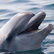 Дельфин умилил соцсети одним движением – взгляните