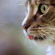Пушистый тролль. Кот научился пользоваться выключателем и довел хозяина до отчаяния (ВИДЕО)