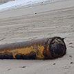 Под Калининградом немецкую торпеду времён Великой Отечественной войны вынесло на пляж