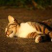 Сорвавшееся свидание: москвич убил кошку, желая отомстить девушке