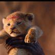 Акуна матата 25 лет спустя. На мировую премьеру «Короля льва» в Беларуси распроданы почти все билеты