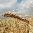 День работников сельского хозяйства отмечают в Беларуси