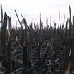 Экологическая проблема в Пинском районе: в пойме Припяти выжжен тростник, где водятся редкие животные и птицы, большинство из которых занесены в Красную Книгу