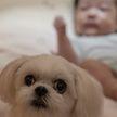 Собака пытается успокоить плачущего ребенка – и у нее получается! Посмотрите, что она делает – это невероятно! (ВИДЕО)