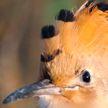 5 редких видов птиц Беларуси. Посмотрите, как они выглядят и где их можно встретить!
