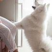 5 неожиданных опасностей для собак в квартире