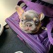 Самые милые пассажиры: 10 фотографий животных, которые отправились в путешествие вместе с хозяевами