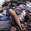 Трагедия в Пуховичском районе: на пожаре погибли бабушка и полуторагодовалый внук