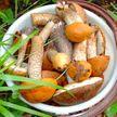 Топ-5 самых ядовитых грибов Беларуси