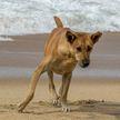 Собака вышла на берег с огромной рыбой в зубах. Отдыхающие были поражены! Как ей это удалось? (ВИДЕО)