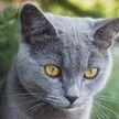 Кошка пыталась украсть щенка из коробки и рассмешила всех (ВИДЕО)