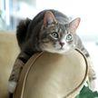 Кошка захотела словить черепашку и вот что она сделала. Посмотрите, это обеспокоило пользователей Сети! (ВИДЕО)