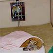 Дома престарелых для животных открыли в Японии (Видео)