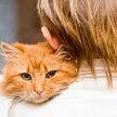 Осторожно, можно заплакать! Реакция мальчика на воссоединение с пропавшим котом растрогала Сеть