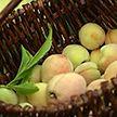 Персики с белорусского огорода: маленькие, «шерстяные», но бесконечно сочные и очень сладкие