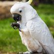 Ученые: попугай, который придумал свой танец, способен к творчеству (ВИДЕО)