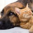 Собаки убегали от щенка, ему не с кем было играть, но неожиданно малыш нашел выход (ВИДЕО)