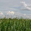 «Совхоз «Доброволец» – пример эффективного хозяйствования на земле
