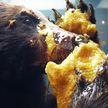 Медведи, которые воровали мёд у пасечника, стали дегустаторами