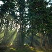 Как не заблудиться в лесу? 6 советов от МЧС