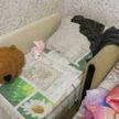 В Бобруйске мужчина до смерти избил трехлетнюю девочку. У нее были сломаны ребра и разорвана печень