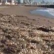 Видеофакт: аргентинский пляж усыпало «жемчугом»