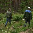Сезон тихой охоты: как не заблудиться в лесу?