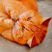 Кот, повторяющий за хозяином звуки, поразил Сеть