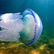 Нашествие медуз в Азовском море превратило его в «суп» (ФОТО и ВИДЕО)