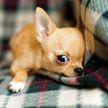 Собака слушала комплименты, улыбалась и просила говорить их еще! Только посмотрите на это! (ВИДЕО)