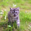 Улыбнетесь, даже если не хотите! Кот так строго посмотрел на собаку, что она занервничала (ВИДЕО)