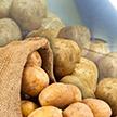 Картофель всему голова: полезные свойства продукта и секреты правильного приготовления