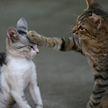 Коту делали массаж, а второй – эмоционально на это реагировал! Только посмотрите на них – 100% будете хохотать до слез! (ВИДЕО)